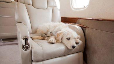 Hond mee in vliegtuig bij First Class Aviation